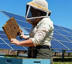 Solar Farms Produce Power... and Food